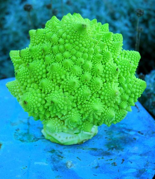 Fractal Cauliflower 2